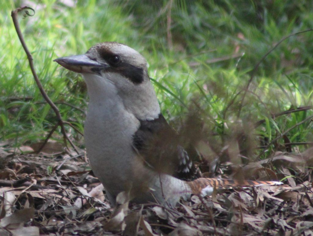 #UniteforAustralia Bird in Australia